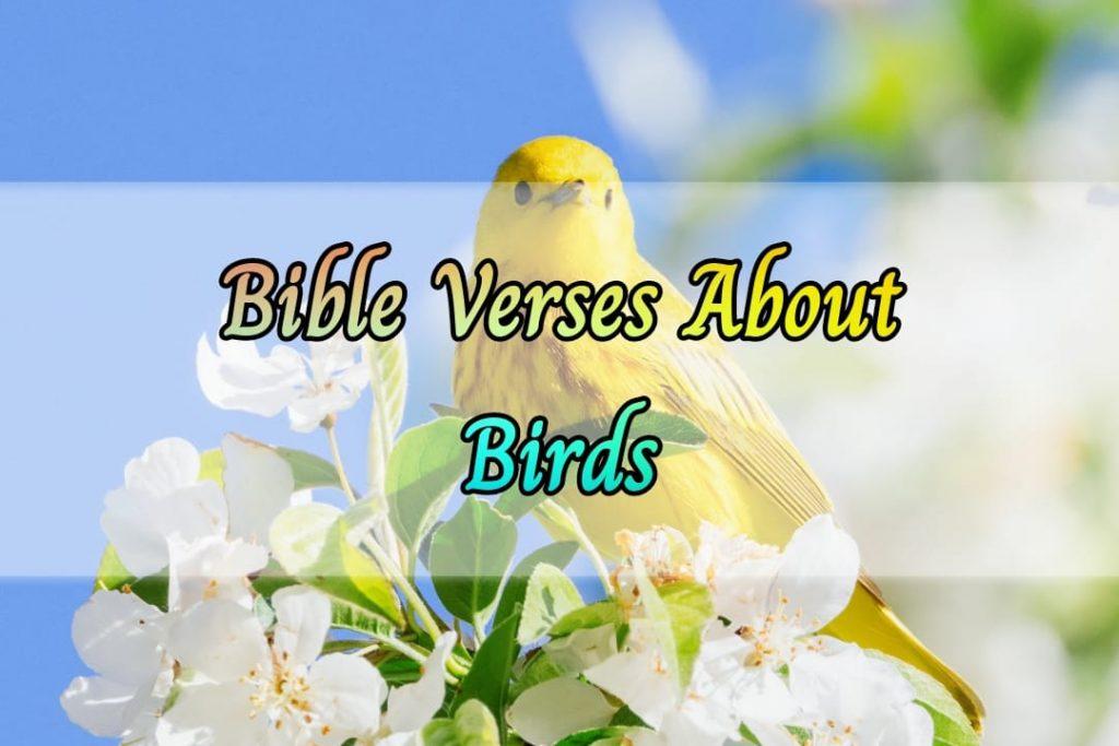 Bible Verses About Birds